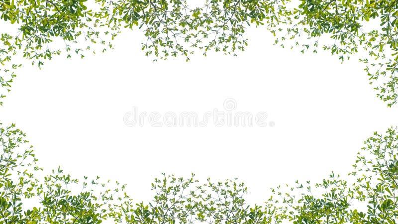 Διακλάδωση πράσινων φύλλων σε απομονωμένο λευκό φόντο, με κενό χώρο για κείμενο ή εικόνες για διαφήμιση και αντιγραφή χώρου στοκ εικόνες