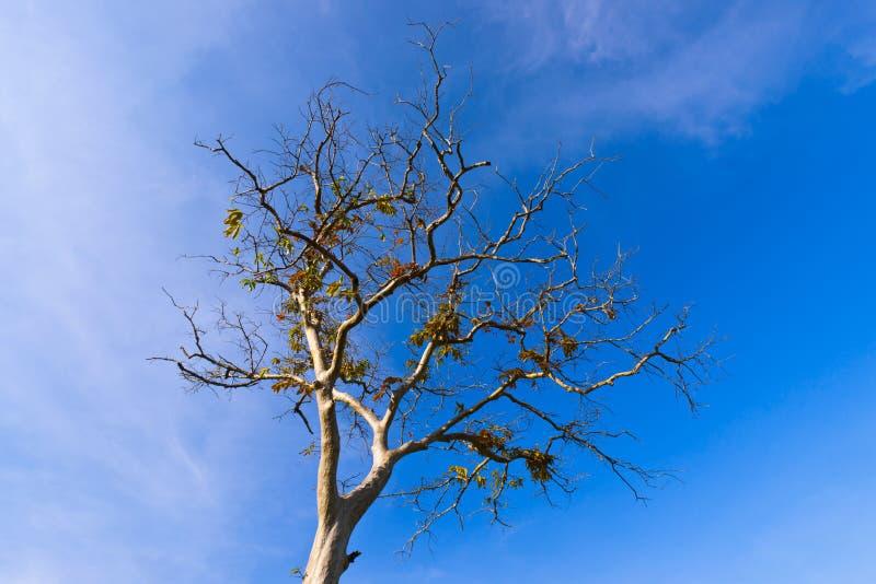 διακλαδιμένος δέντρο φύλ& στοκ εικόνες