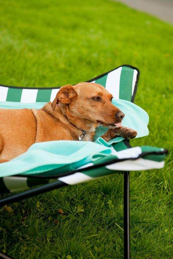διακοπές σκυλιών στοκ εικόνες με δικαίωμα ελεύθερης χρήσης