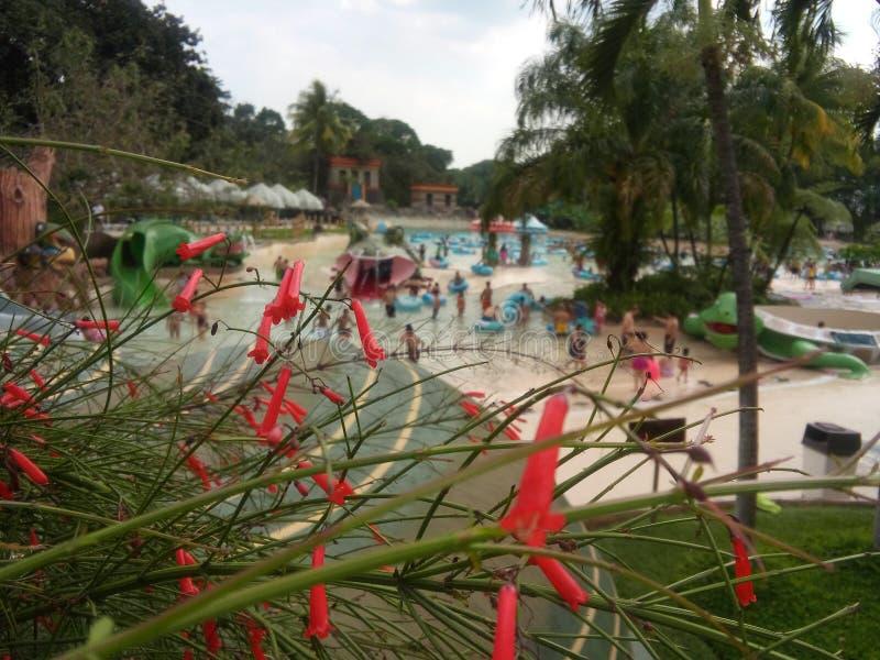 Διακοπές στη Γουατεμάλα στοκ φωτογραφία με δικαίωμα ελεύθερης χρήσης