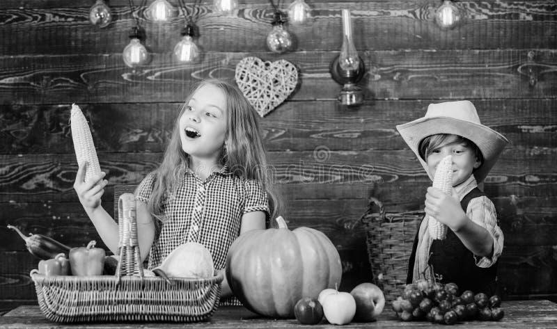 Διακοπές σχολικού φεστιβάλ Ιδέα φεστιβάλ πτώσης δημοτικών σχολείων Γιορτάστε το φεστιβάλ συγκομιδών Τα παιδιά παίζουν corncobs στοκ εικόνα