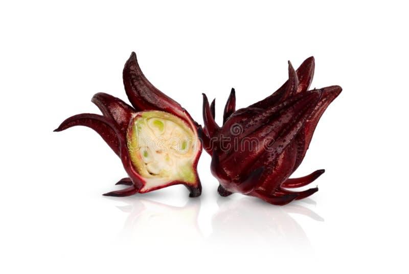Διακοπή φρούτων Roselle που απομονώνεται στο λευκό στοκ εικόνα