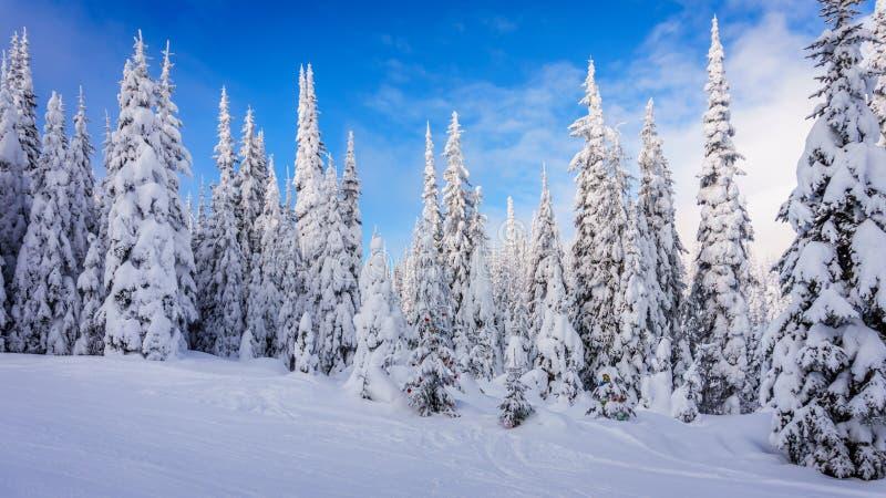Διακοσμήσεις Χριστουγέννων στα χιονισμένα δέντρα πεύκων στο δάσος στοκ εικόνες