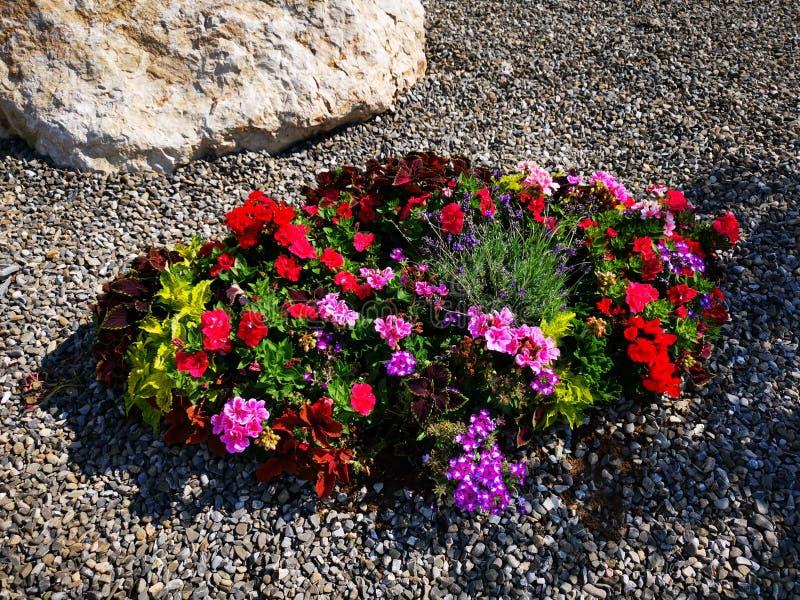 Διακοσμητικά ζωηρόχρωμα λουλούδια στο αμμοχάλικο στοκ φωτογραφία με δικαίωμα ελεύθερης χρήσης