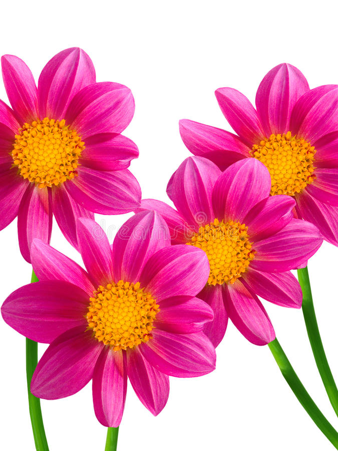 διακοσμητικά λουλούδι& στοκ εικόνες με δικαίωμα ελεύθερης χρήσης
