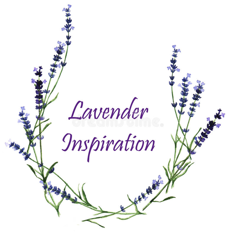 Διακοσμητικά στοιχεία Watercolor - στεφάνι με lavender διανυσματική απεικόνιση