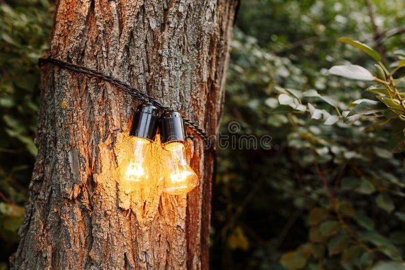 Διακοσμητικά υπαίθρια φω'τα σειράς που κρεμούν στο δέντρο στον κήπο στη νύχτα στοκ εικόνες με δικαίωμα ελεύθερης χρήσης