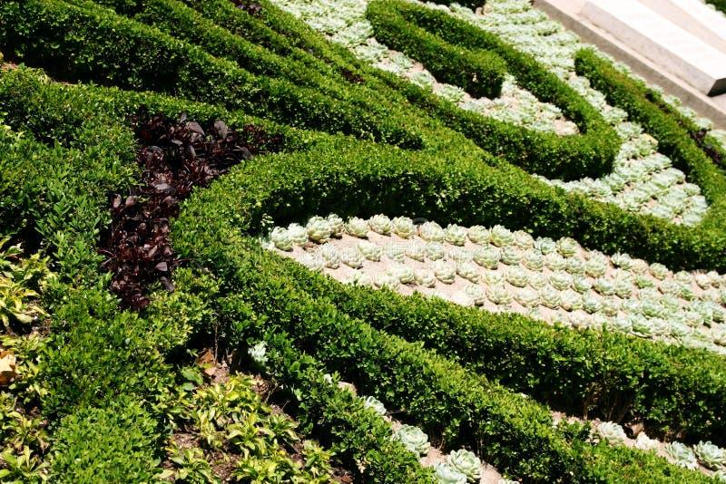 διακοσμητικά φυτά στοκ εικόνα