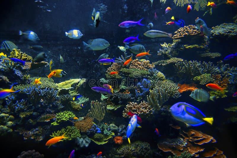 Download Διακοσμητικά ψάρια ενυδρείων Στοκ Εικόνες - εικόνα από βαθιά, ζωή: 62706510