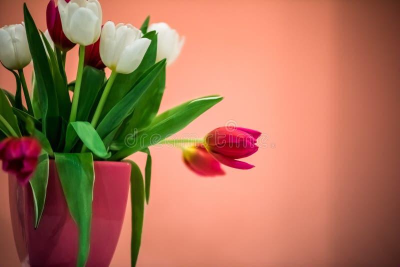 Διακοσμητικές όμορφες τουλίπες στο κεραμικό δοχείο στοκ φωτογραφία με δικαίωμα ελεύθερης χρήσης