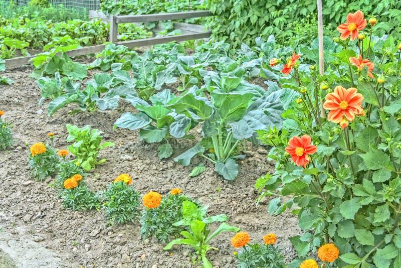 Διακοσμητικός κήπος κουζινών με τα λαχανικά και τα λουλούδια στοκ εικόνα