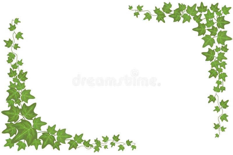 Διακοσμητικός πράσινος τοίχος κισσών που αναρριχείται στο διανυσματικό πλαίσιο εγκαταστάσεων ελεύθερη απεικόνιση δικαιώματος