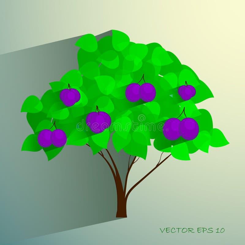 Διακοσμητικό δέντρο δαμάσκηνων με τα ώριμα φρούτα απεικόνιση αποθεμάτων