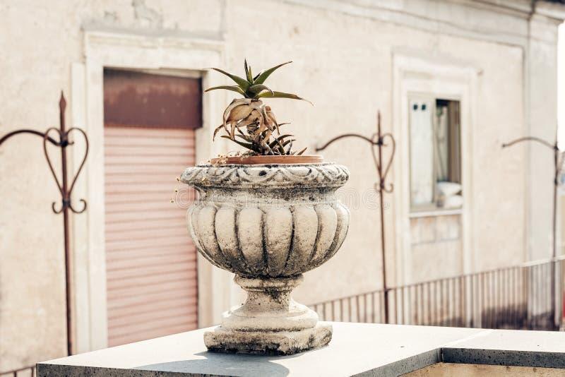 Διακοσμητικό δοχείο πετρών για τις εγκαταστάσεις στο πεζούλι ενός ιστορικού κτηρίου στην Κατάνια, Σικελία, Ιταλία στοκ εικόνα με δικαίωμα ελεύθερης χρήσης