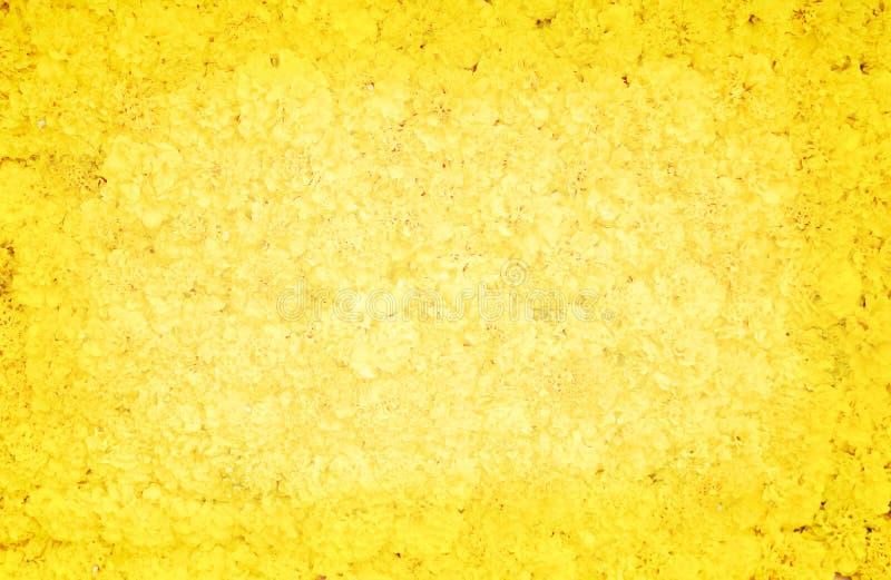Διακοσμητικό ζωηρόχρωμο marigold ανθίζει στον τοίχο για το υπόβαθρο, σύσταση φύσης erecta Tagetes στοκ φωτογραφία με δικαίωμα ελεύθερης χρήσης