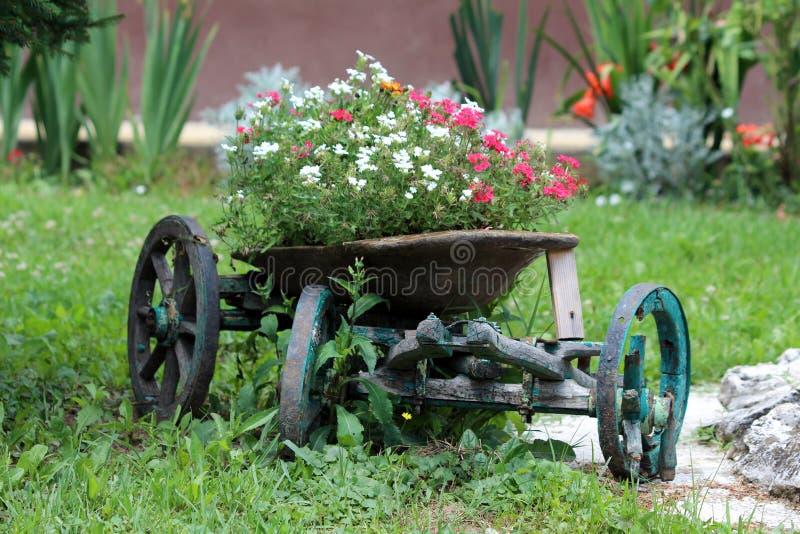 Διακοσμητικό παλιό ξύλινο περίστροφο με σπασμένους τροχούς γεμάτους με πυκνά φυτεμένα μικρά λευκά και κόκκινα άνθη στοκ φωτογραφία
