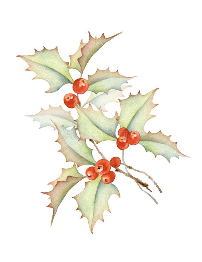 Διακόσμηση διακοπών Χριστουγέννων Κλάδος μούρων της Holly ελεύθερη απεικόνιση δικαιώματος