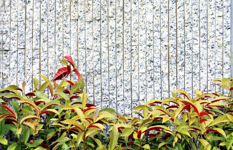διακόσμηση του φυτού στοκ φωτογραφία με δικαίωμα ελεύθερης χρήσης