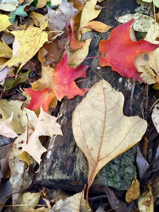 Διαμορφωμένο το Μίτσιγκαν φύλλο στοκ φωτογραφίες