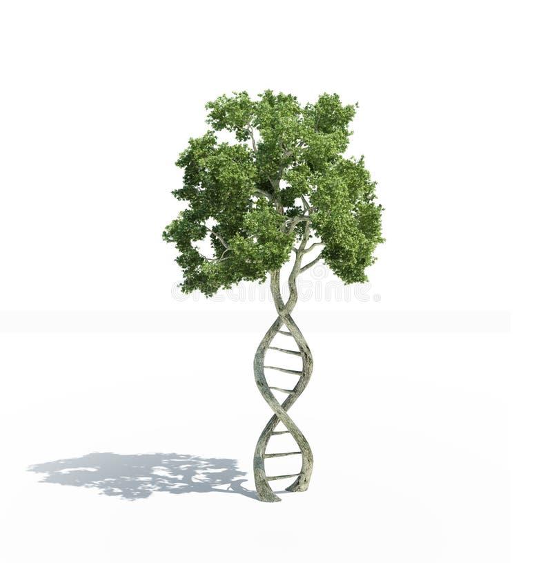 Διαμορφωμένο DNA δέντρο ελεύθερη απεικόνιση δικαιώματος