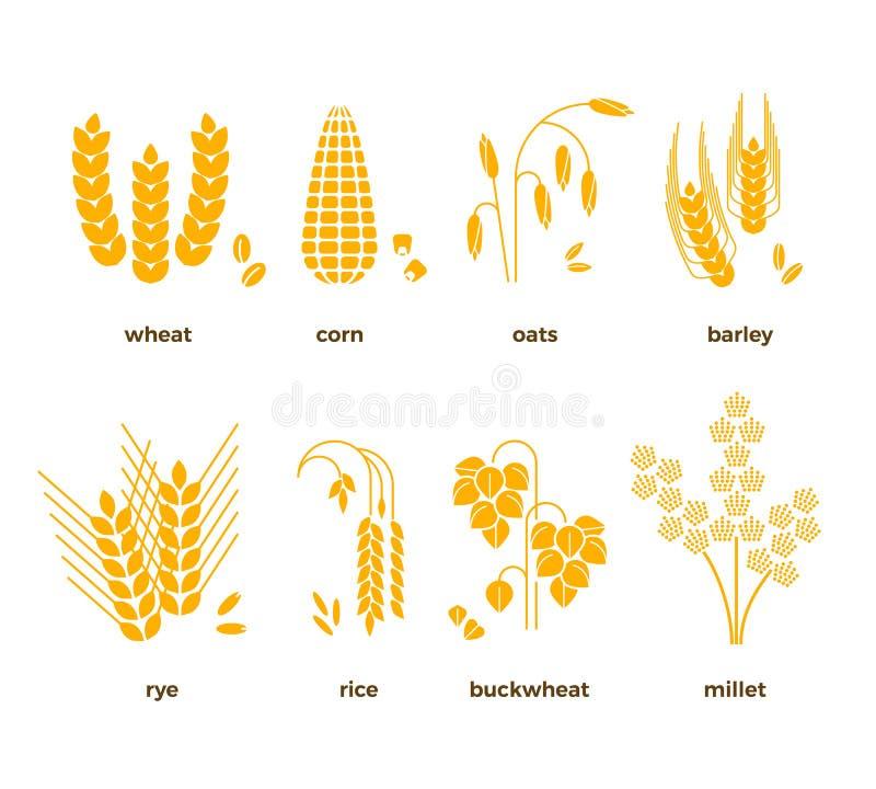 Διανυσματικά εικονίδια σιταριών δημητριακών ρύζι, σίτος, καλαμπόκι, βρώμες, σίκαλη, κριθάρι ελεύθερη απεικόνιση δικαιώματος