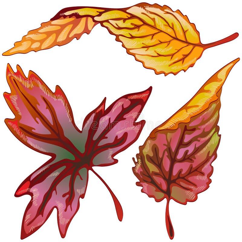 Διανυσματικά κίτρινα και κόκκινα φύλλα φθινοπώρου Απομονωμένο στοιχείο απεικόνισης διανυσματική απεικόνιση
