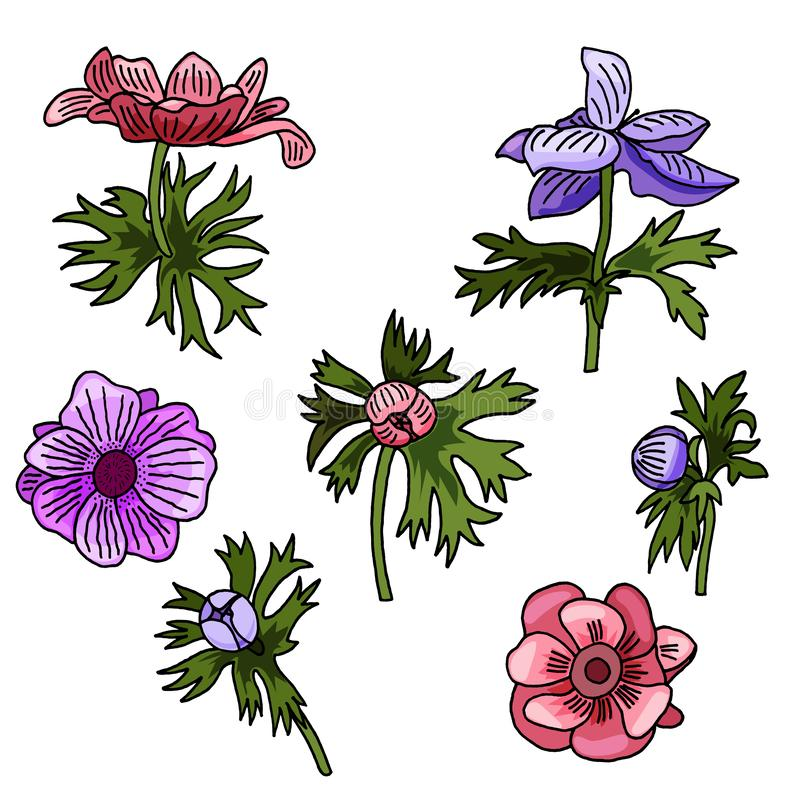 Διανυσματικά λουλούδια Anemone απεικόνισης καθορισμένα Συρμένα λουλούδια και φύλλα ελεύθερη απεικόνιση δικαιώματος
