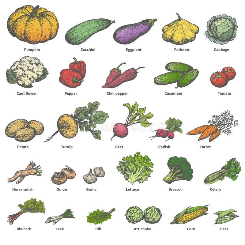 Διανυσματικά μεγάλα διαφορετικά χρωματισμένα ώριμα λαχανικά συνόλου απεικόνιση αποθεμάτων