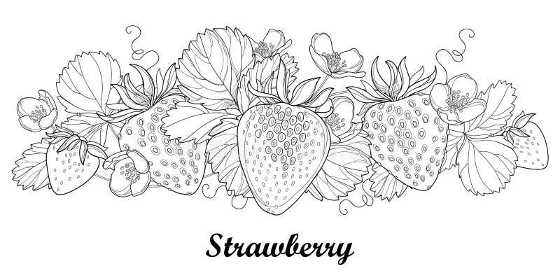 Διανυσματικά οριζόντια σύνορα με τη φράουλα περιλήψεων με το μούρο, το λουλούδι και το φύλλωμα στο Μαύρο στο λευκό Στοιχεία μούρω απεικόνιση αποθεμάτων