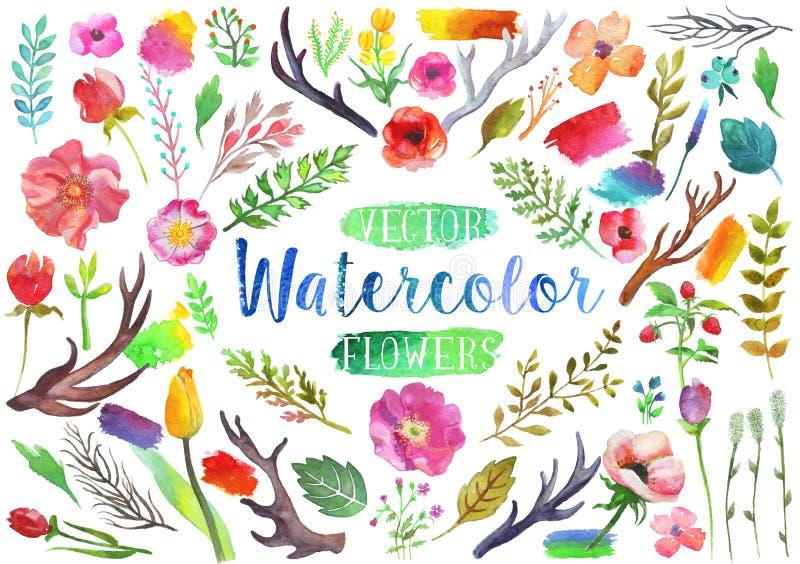 Διανυσματικά λουλούδια και φύλλα ακουαρελών watercolor διανυσματική απεικόνιση