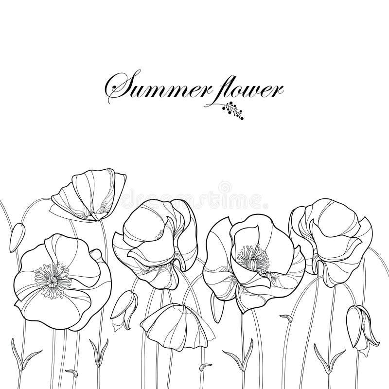 Διανυσματικά σύνορα με το λουλούδι παπαρουνών περιλήψεων και οφθαλμός στο Μαύρο που απομονώνεται στο άσπρο υπόβαθρο Floral στοιχε ελεύθερη απεικόνιση δικαιώματος