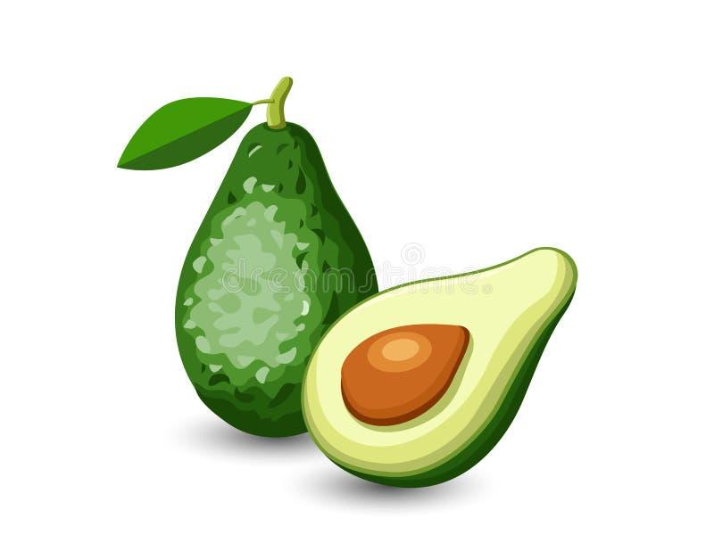 Διανυσματικά φρούτα αβοκάντο που απομονώνονται στο άσπρο υπόβαθρο απεικόνιση αποθεμάτων