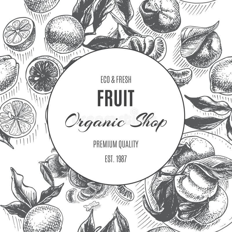 Διανυσματικά φρούτα υποβάθρου σκίτσων Εσπεριδοειδή - κίτρο, λεμόνι, πορτοκάλι, ασβέστης, tangerine, tangelo, γκρέιπφρουτ διανυσματική απεικόνιση