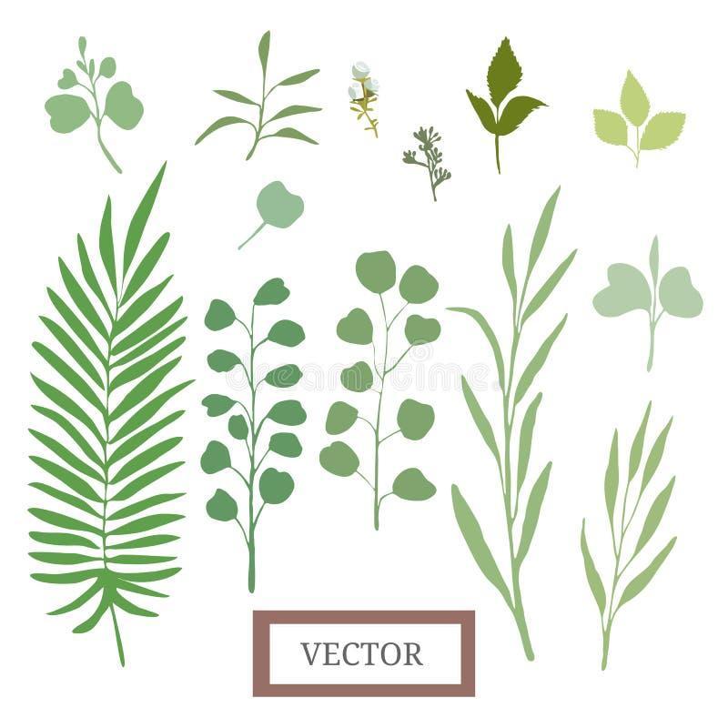 Διανυσματικά φύλλα καθορισμένα στοκ φωτογραφία