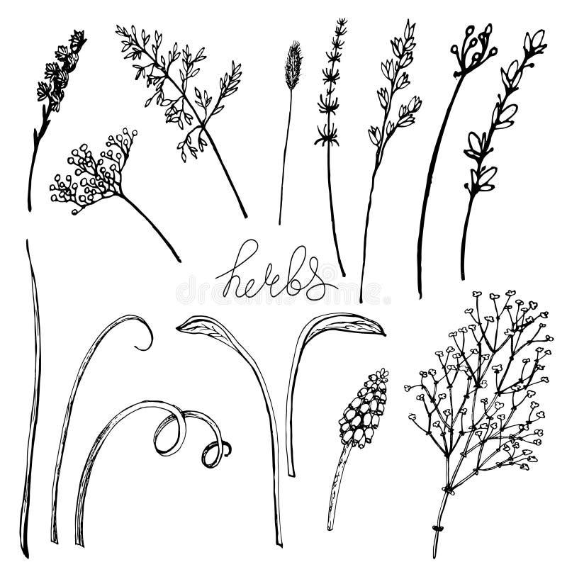 Διανυσματικά floral χορτάρια μορίων απεικόνισης διανυσματική απεικόνιση