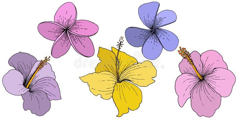Διανυσματικά Hibiscus floral τροπικά λουλούδια Χαραγμένη τέχνη μελανιού Απομονωμένο hibiscus στοιχείο απεικόνισης στο άσπρο υπόβα απεικόνιση αποθεμάτων