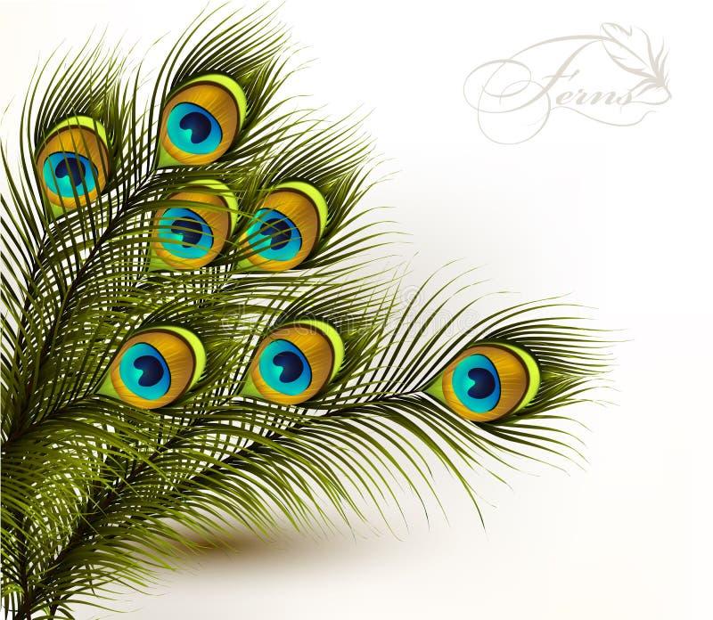 Διανυσματικές ζωηρόχρωμες φτέρες Peacock σε ένα άσπρο υπόβαθρο ελεύθερη απεικόνιση δικαιώματος