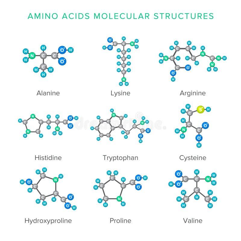 Διανυσματικές μοριακές δομές των αμινοξέων που απομονώνονται στο άσπρο σύνολο απεικόνιση αποθεμάτων