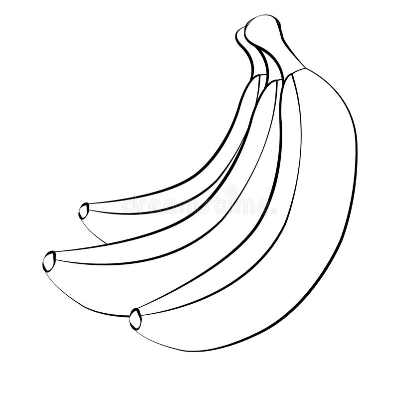 Διανυσματικές μπανάνες Δέσμες των άσπρων φρούτων μπανανών με το μαύρο κτύπημα που απομονώνεται στο άσπρο υπόβαθρο διανυσματική απεικόνιση