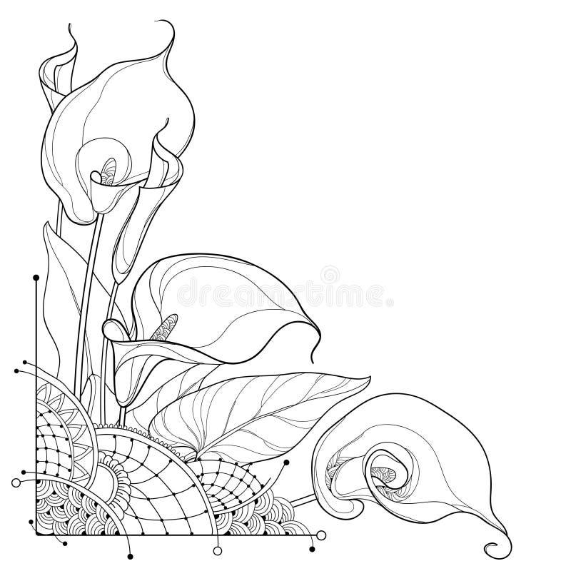 Διανυσματική ανθοδέσμη γωνιών του λουλουδιού ή Zantedeschia κρίνων της Calla περιλήψεων, οφθαλμός και περίκομψο φύλλο στο Μαύρο π απεικόνιση αποθεμάτων