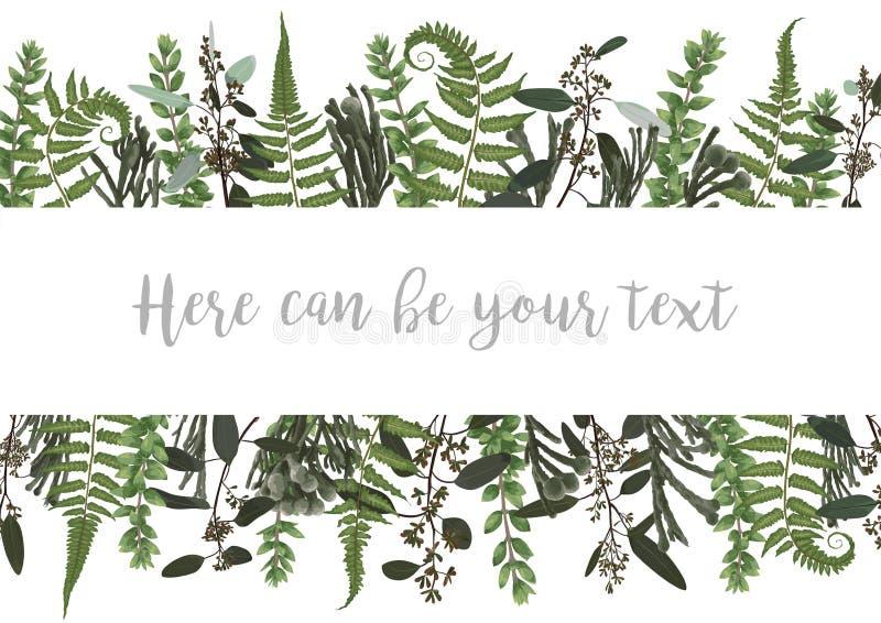 Διανυσματική απεικόνιση ενός πλαισίου με τα πράσινα φύλλα μιας δασικών φτέρης, ενός πυξαριού και ενός ευκαλύπτου, brunia Σχέδιο γ ελεύθερη απεικόνιση δικαιώματος