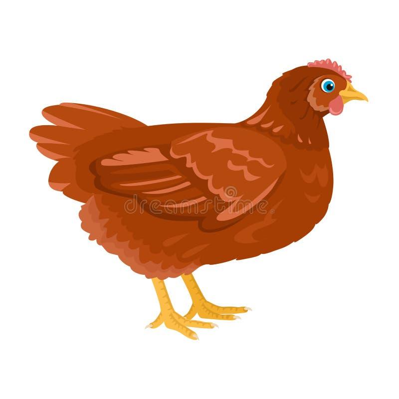 Διανυσματική απεικόνιση κινούμενων σχεδίων κοτόπουλου Αγροτικό πουλί που απομονώνεται στο άσπρο υπόβαθρο ελεύθερη απεικόνιση δικαιώματος