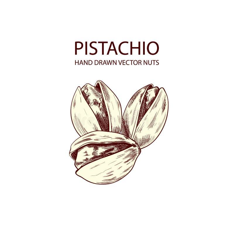 Διανυσματική απεικόνιση λογότυπων φυστικιών συρμένη χέρι, σχέδιο περιλήψεων, απομονωμένα καρύδια διανυσματική απεικόνιση
