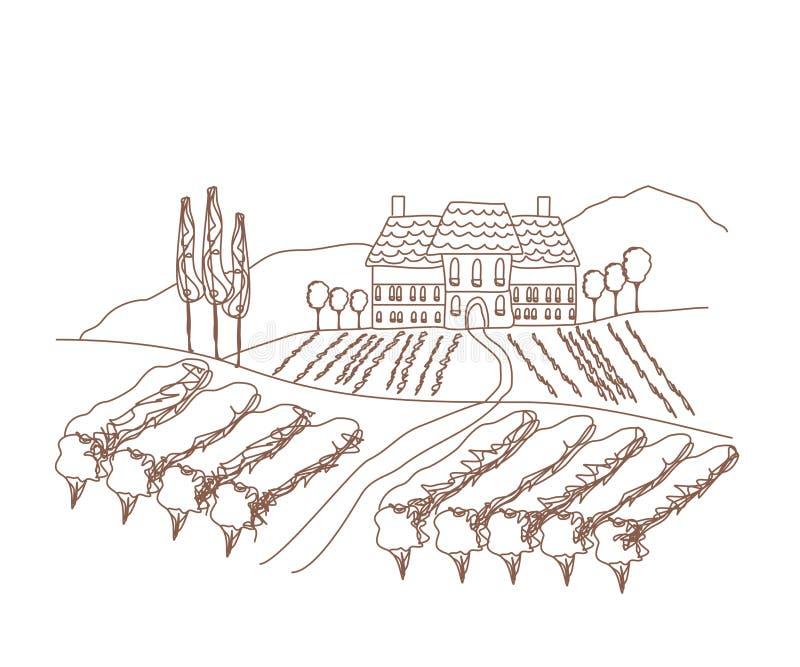 Διανυσματική απεικόνιση του αμπελώνα ελεύθερη απεικόνιση δικαιώματος