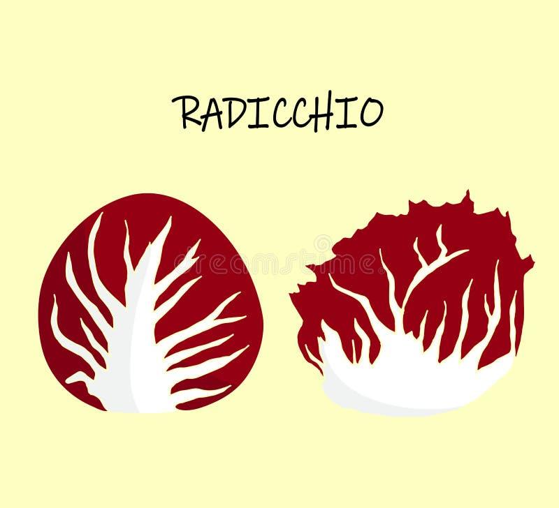 Διανυσματική απεικόνιση του radicchio, επίσης escariol, ιταλικό ραδίκι διανυσματική απεικόνιση
