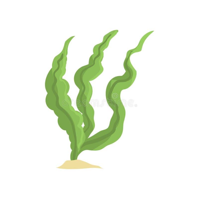 Διανυσματική απεικόνιση των μακριών πράσινων αλγών που απομονώνεται στο άσπρο υπόβαθρο Χλόη θάλασσας στο αμμώδες κατώτατο σημείο ελεύθερη απεικόνιση δικαιώματος