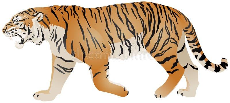Διανυσματική απεικόνιση χρώματος περιπάτων τιγρών διανυσματική απεικόνιση