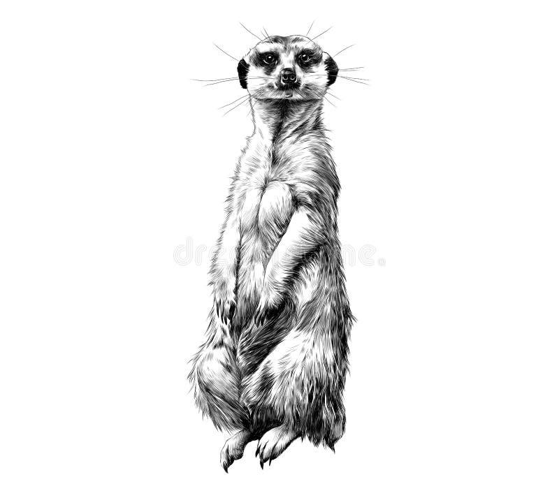 Διανυσματική γραφική παράσταση σκίτσων Meerkat διανυσματική απεικόνιση