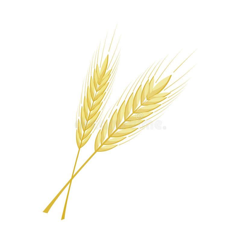 Διανυσματική δέσμη των αυτιών σίτου, σίκαλης ή κριθαριού με ολόκληρα το σιτάρι και τα φύλλα ελεύθερη απεικόνιση δικαιώματος
