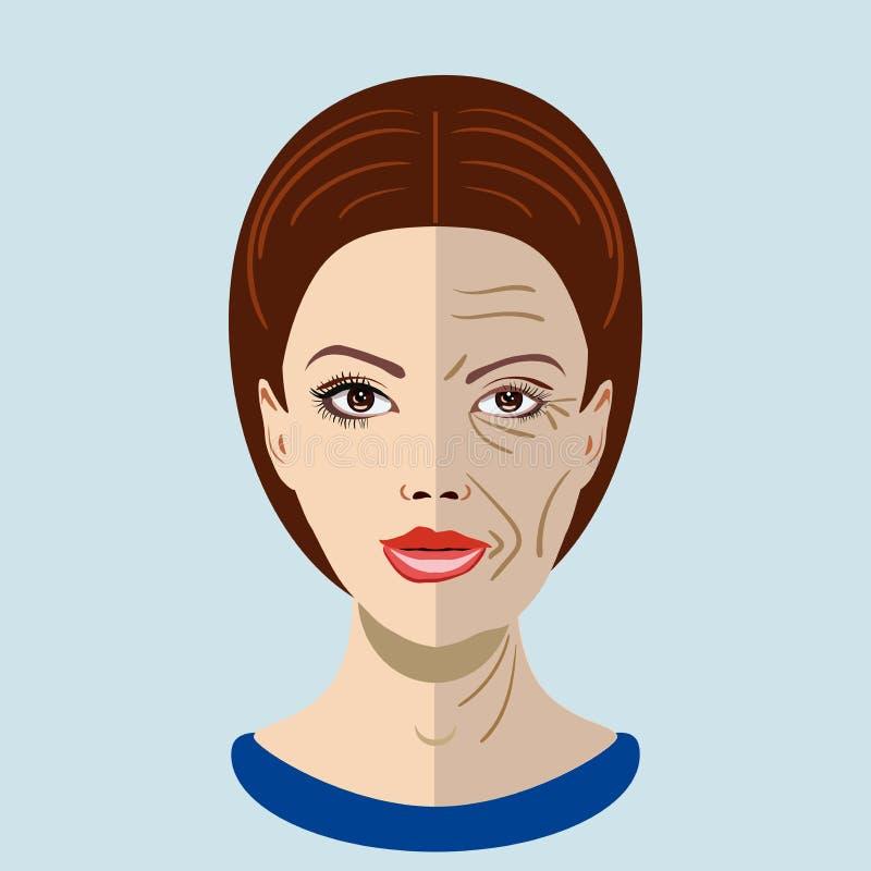 Διανυσματική διαδικασία γήρανσης, πρόσωπο με δύο τύπους δερμάτων, νέος και παλαιός στοκ εικόνα